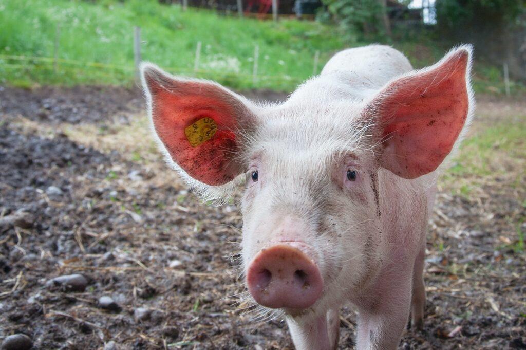 farm animal services